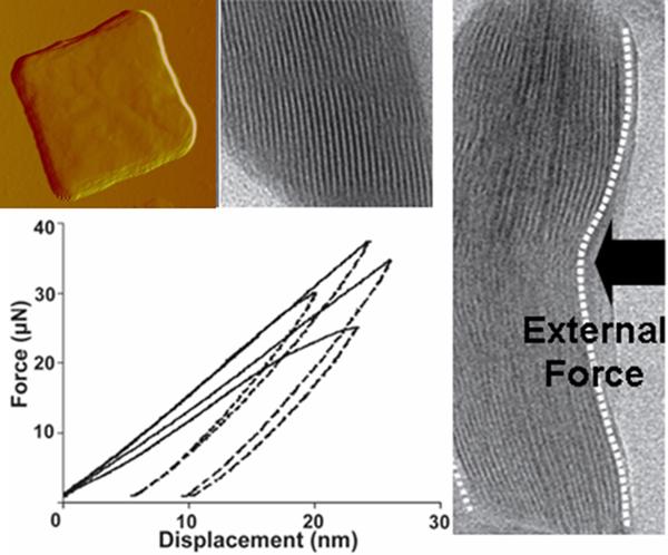 羟基磷灰石(hap)晶体,这种多层复合的结构让骨骼的硬度和抗弯能力兼备