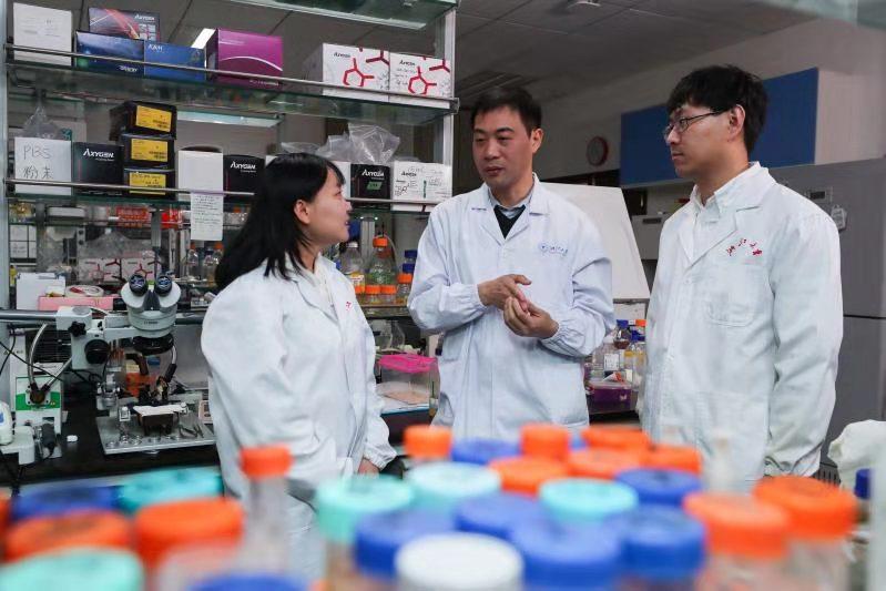 """大脑中的免疫细胞竟是记忆遗忘的""""主谋"""",浙大成果登《科学》"""